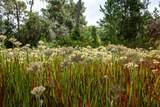 13115 Seminole Trail - Photo 13