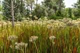 13115 Seminole Trail - Photo 14