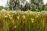 13115 Seminole Trail - Photo 15