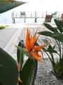 5075 Starfish Drive - Photo 62