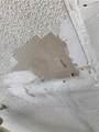 13916 Bonnie Brae Drive - Photo 34