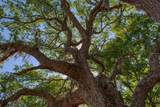 15355 Serengeti Boulevard - Photo 14