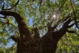 15355 Serengeti Boulevard - Photo 17
