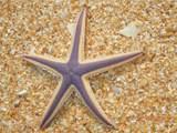 300 Cinnamon Beach Way - Photo 38
