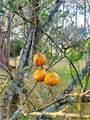 8140 Autumn Lane - Photo 47