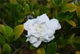 17350 White Water Court - Photo 83