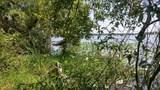 Hibiscus Lane - Photo 2
