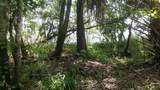Hibiscus Lane - Photo 6