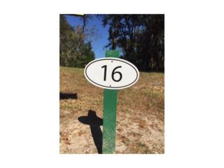 29523 Chapel Park Drive, Wesley Chapel, FL 33543 (MLS #T2851723) :: The Duncan Duo & Associates