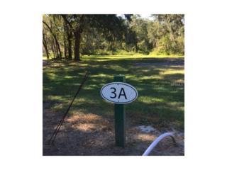 29509 Chapel Park Drive, Wesley Chapel, FL 33543 (MLS #T2851727) :: The Duncan Duo & Associates