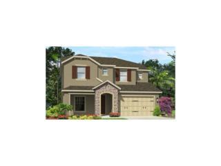 3506 Wicket Field Road, Lutz, FL 33548 (MLS #T2870409) :: The Duncan Duo & Associates
