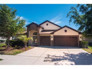 31708 Holcomb Pass, Wesley Chapel, FL 33543 (MLS #T2873462) :: The Duncan Duo & Associates