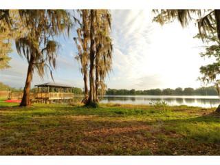 3635 Little Road, Lutz, FL 33548 (MLS #T2877661) :: The Duncan Duo & Associates