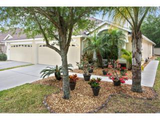 31832 Turkeyhill Drive, Wesley Chapel, FL 33543 (MLS #T2877696) :: The Duncan Duo & Associates