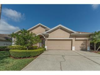 10236 Millport Drive, Tampa, FL 33626 (MLS #U7813628) :: The Duncan Duo & Associates
