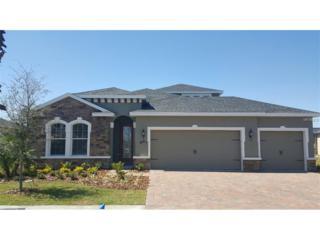 12206 Dusty Miller Place, Riverview, FL 33579 (MLS #W7629116) :: The Duncan Duo & Associates