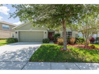 6912 Runner Oak Drive, Wesley Chapel, FL 33545 (MLS #W7629303) :: The Duncan Duo & Associates