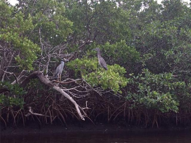 Joes Island, Terra Ceia, FL 34250 (MLS #A4412679) :: Zarghami Group