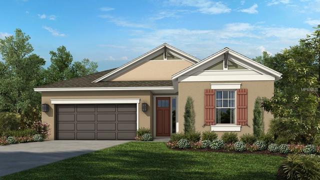 8005 Clementine Lane, Tampa, FL 33625 (MLS #A4431098) :: Zarghami Group
