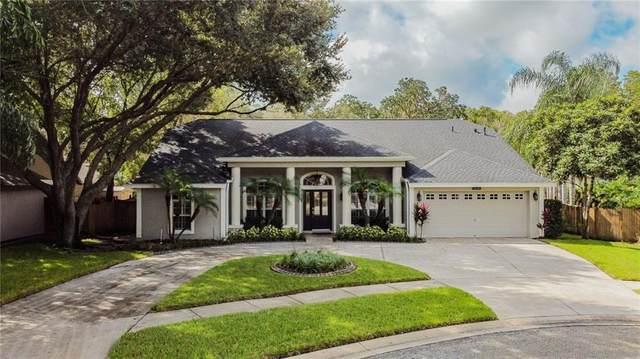 5646 Glencrest Boulevard, Tampa, FL 33625 (MLS #A4479017) :: Griffin Group