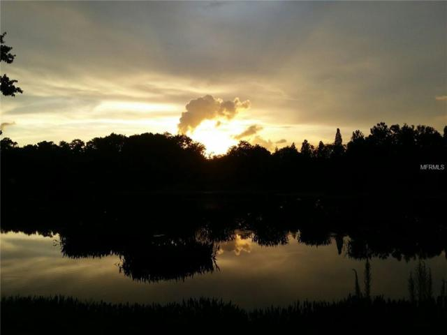 5639 Killian Path, Wesley Chapel, FL 33543 (MLS #E2400523) :: Team Pepka