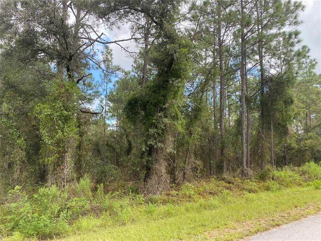 NW Buena Vista Road, Dunnellon, FL 34431 (MLS #G5047788) :: Delgado Home Team at Keller Williams