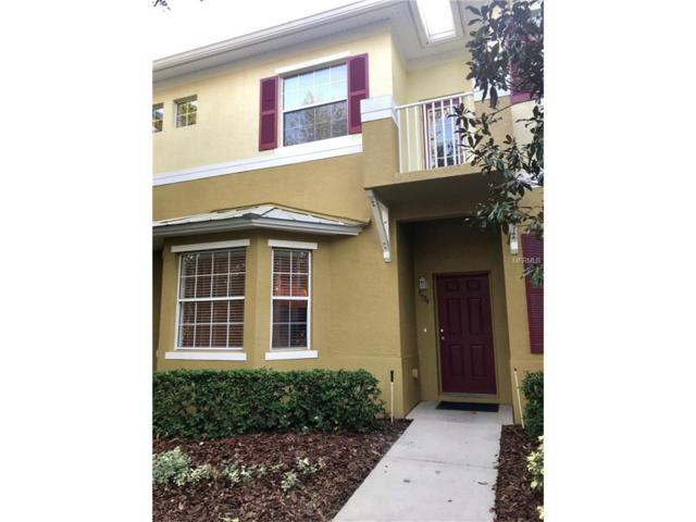 7534 Tamarind Avenue, Tampa, FL 33625 (MLS #O5548743) :: Griffin Group