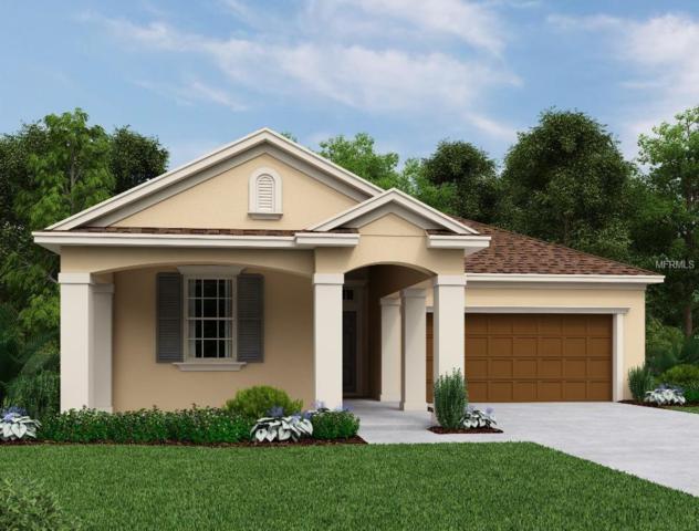 2877 Posada Lane, Odessa, FL 33556 (MLS #O5744734) :: Griffin Group