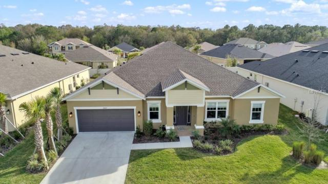 26869 Fiddlewood Loop, Wesley Chapel, FL 33544 (MLS #O5765597) :: NewHomePrograms.com LLC
