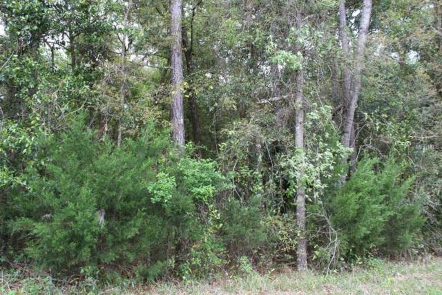 137 SW Tbd, Starke, FL 32091 (MLS #O5777107) :: The Duncan Duo Team