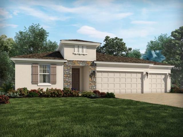 30359 Five Farms Avenue, Wesley Chapel, FL 33543 (MLS #O5783955) :: Florida Real Estate Sellers at Keller Williams Realty