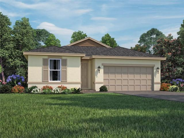 751 Cajeput Loop, Tarpon Springs, FL 34689 (MLS #O5786283) :: The Duncan Duo Team