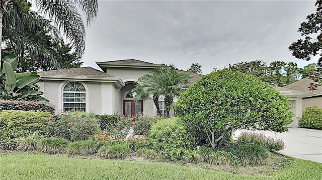 27740 Pine Point Drive, Wesley Chapel, FL 33544 (MLS #O5881764) :: Premier Home Experts
