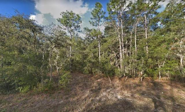 34338 Berryhill Drive, Webster, FL 33597 (MLS #O5941799) :: Bob Paulson with Vylla Home