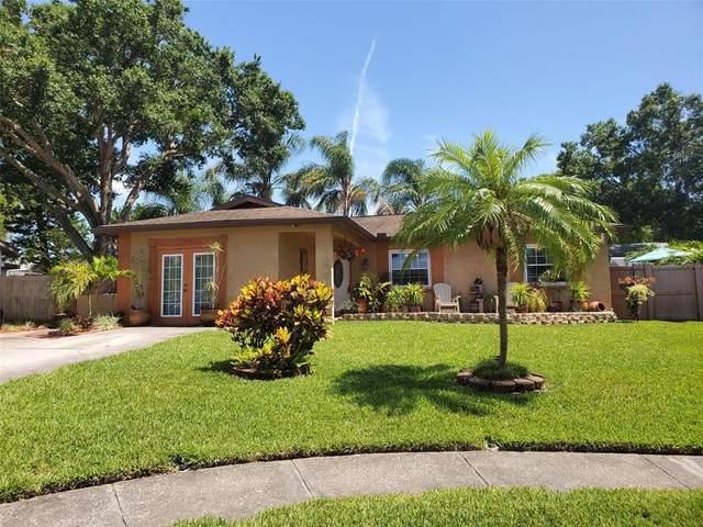 2310 Knoll Avenue S, Palm Harbor, FL 34683 (MLS #O5951611) :: The Duncan Duo Team