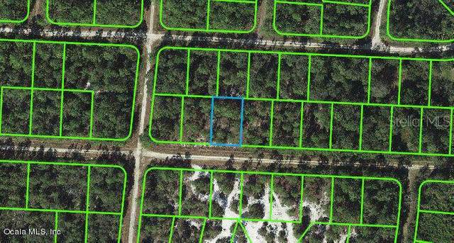 3227 Michele Avenue, Lake Placid, FL 33852 (MLS #OM541256) :: Alpha Equity Team