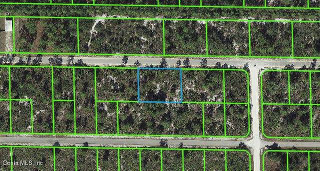 3340 Rhododendron Road, Lake Placid, FL 33852 (MLS #OM541271) :: Zarghami Group