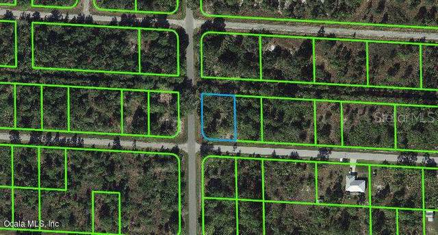 3465 Rhododendron Road, Lake Placid, FL 33852 (MLS #OM541273) :: Rabell Realty Group
