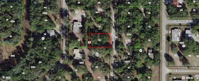 6416 N Bluebonnet Drive, Hernando, FL 34442 (MLS #OM605838) :: Zarghami Group