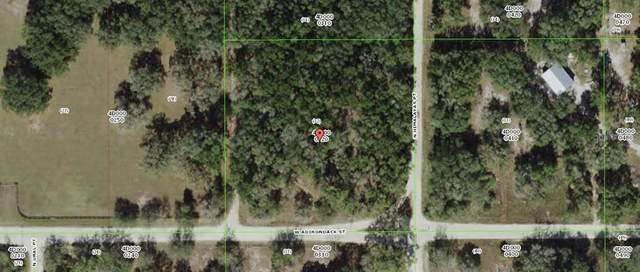 8794 N Himalayas Point, Dunnellon, FL 34433 (MLS #OM616252) :: The Light Team