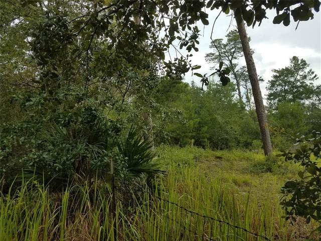 NE 234TH Place, Fort Mc Coy, FL 32134 (MLS #OM624060) :: The Hustle and Heart Group