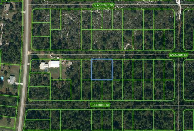 1411 Caladium Street, Lake Placid, FL 33852 (MLS #OM624816) :: Visionary Properties Inc