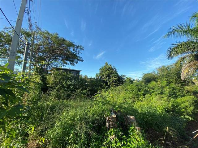 Bo. Mora, ISABELA, PR 00662 (MLS #PR9090884) :: Griffin Group