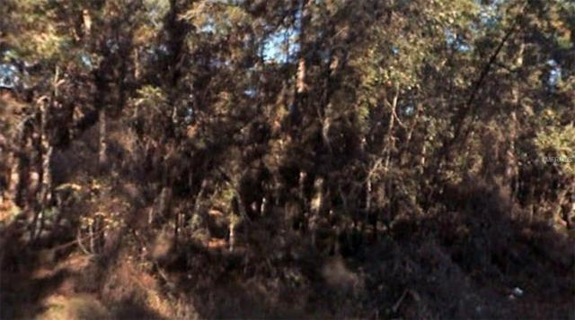 Address Not Published, Altoona, FL 32702 (MLS #R4900795) :: The Duncan Duo Team