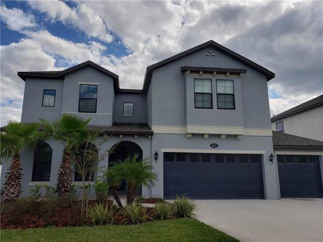 10625 Mistflower Lane, Tampa, FL 33647 (MLS #S5024891) :: Zarghami Group