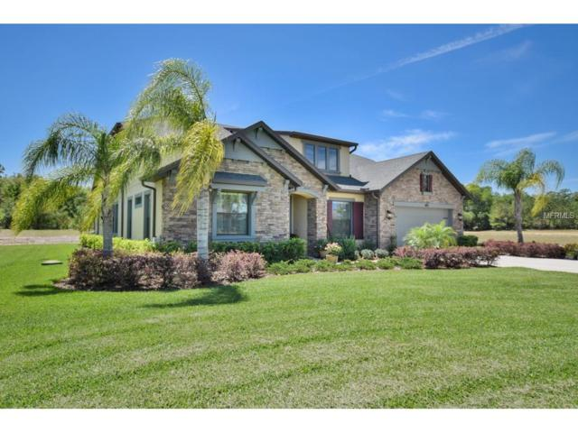 17802 Daisy Farm Dr, Lutz, FL 33559 (MLS #T2875625) :: The Duncan Duo & Associates