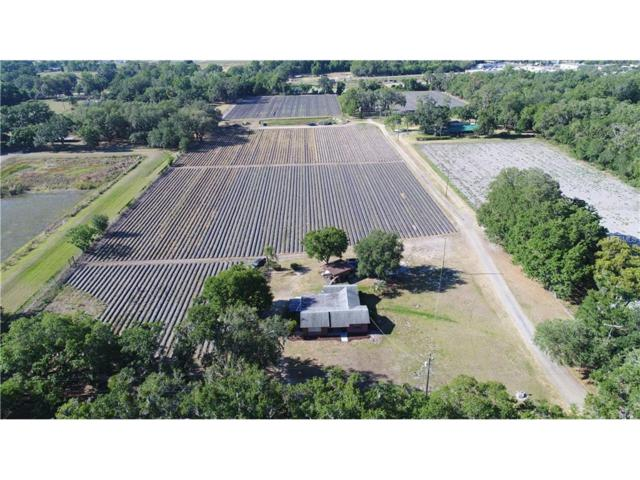 13087 Newsome Road, Dover, FL 33527 (MLS #T2877404) :: Griffin Group