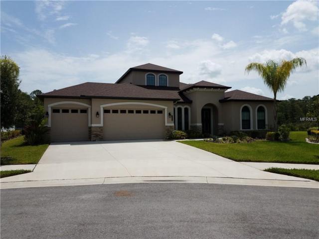 20003 Heron Crossing Drive, Tampa, FL 33647 (MLS #T2881632) :: Team Bohannon Keller Williams, Tampa Properties