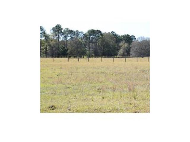 15016 Patterson Road, Odessa, FL 33556 (MLS #T2889153) :: Griffin Group