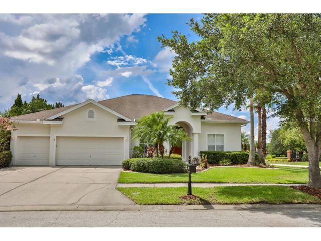 10238 Millport Drive, Tampa, FL 33626 (MLS #T2890582) :: The Duncan Duo & Associates